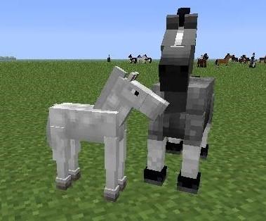 Foal when horses breed